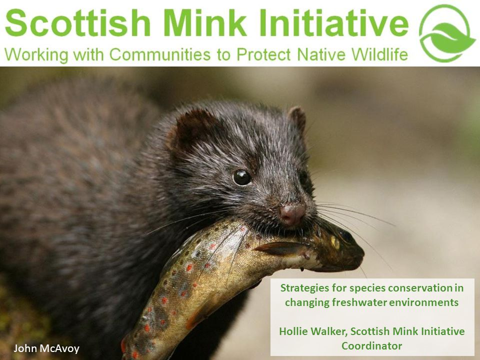 Strategies for species conservation in changing freshwater environments Hollie Walker, Scottish Mink Initiative Coordinator John McAvoy