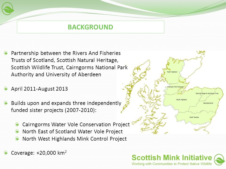 Partnership between the Rivers And Fisheries Trusts of Scotland, Scottish Natural Heritage, Scottish Wildlife Trust, Cairngorms National Park Authority and University of Aberdeen April 2011-August 2013 Builds upon and expands three independently funded sister projects (2007-2010): Cairngorms Water Vole Conservation Project North East of Scotland Water Vole Project North West Highlands Mink Control Project Coverage: +20,000 km 2 BACKGROUND