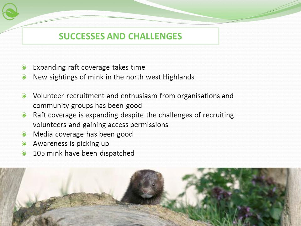 Expanding raft coverage takes time New sightings of mink in the north west Highlands Volunteer recruitment and enthusiasm from organisations and commu
