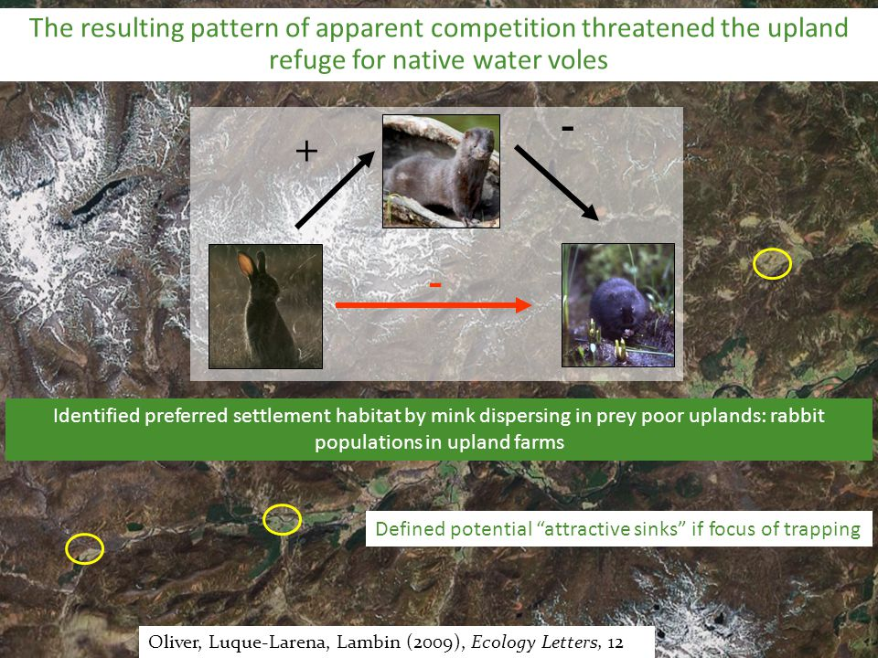 50 km Oliver, Luque-Larena, Lambin (2009), Ecology Letters, 12 + - - The resulting pattern of apparent competition threatened the upland refuge for na