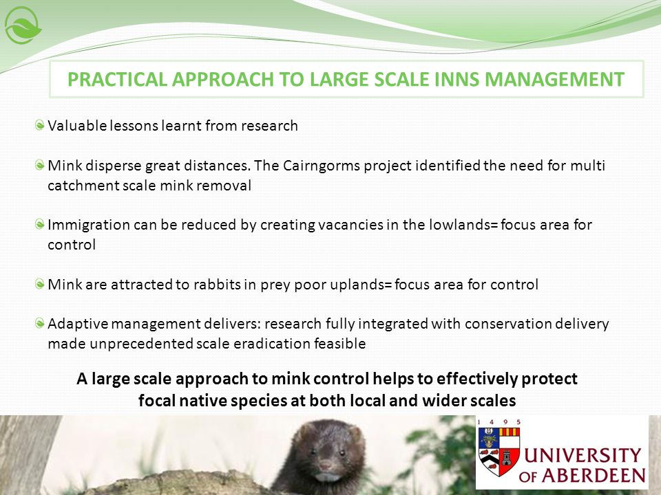 PRACTICAL APPROACH TO LARGE SCALE INNS MANAGEMENT Valuable lessons learnt from research Mink disperse great distances. The Cairngorms project identifi