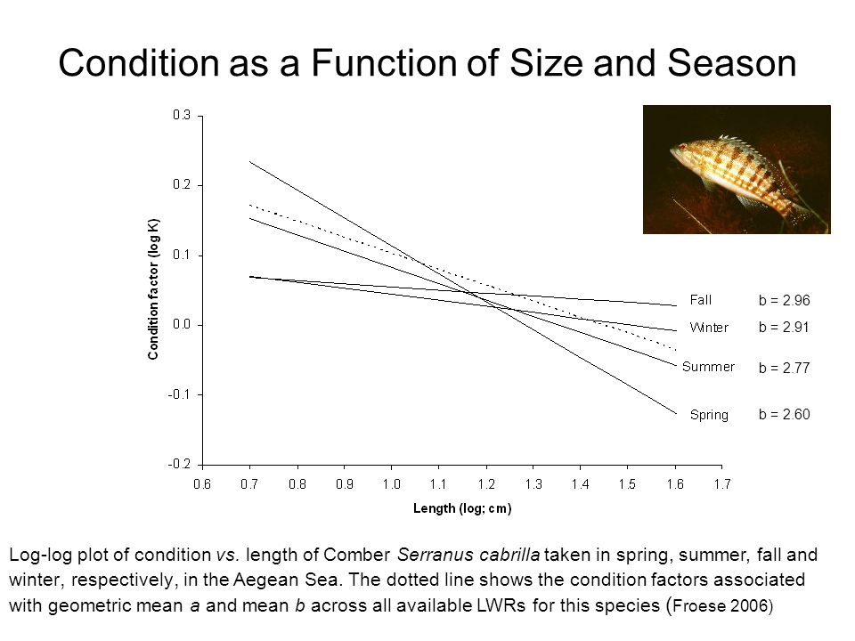 Condition as a Function of Size and Season Log-log plot of condition vs.