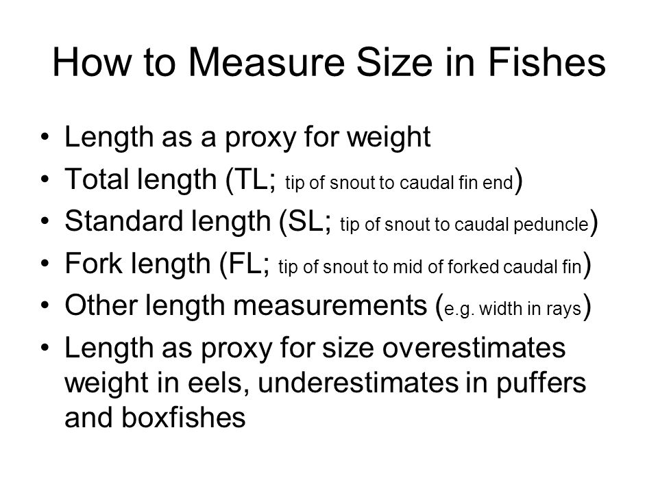 How to Measure Size in Fishes Length as a proxy for weight Total length (TL; tip of snout to caudal fin end ) Standard length (SL; tip of snout to caudal peduncle ) Fork length (FL; tip of snout to mid of forked caudal fin ) Other length measurements ( e.g.