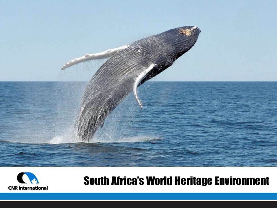 South Africa's World Heritage Environment