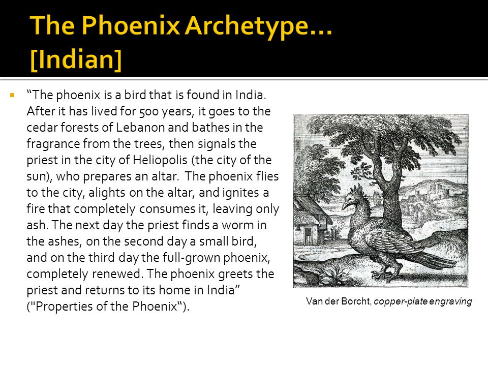  The phoenix is a bird that is found in India.
