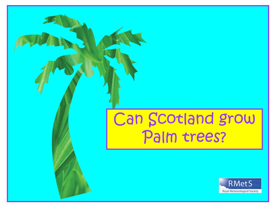 Can Scotland grow Palm trees