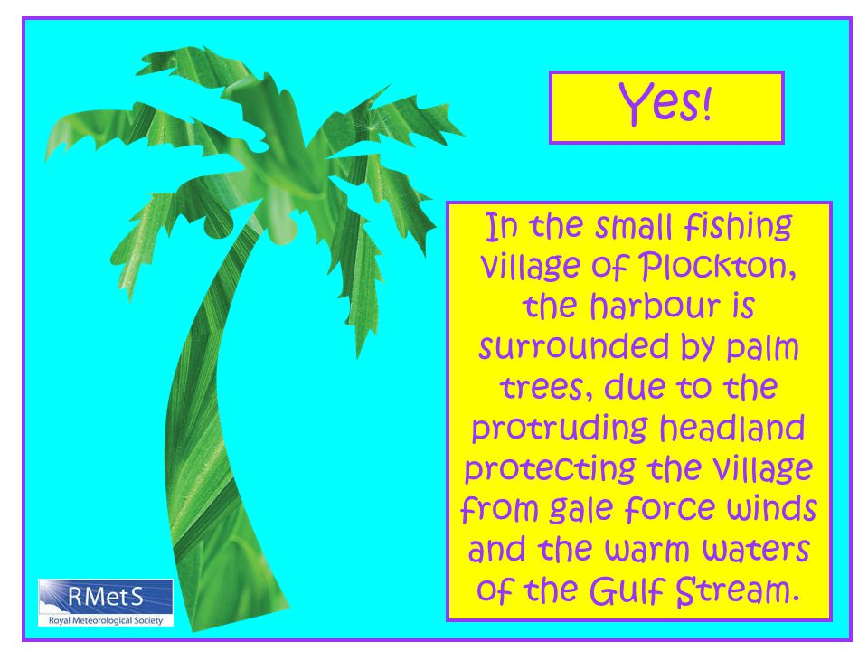 Yes! In the small fishing village of Plockton, the harbour is surrounded by palm trees, due to the protruding headland protecting the village from gal