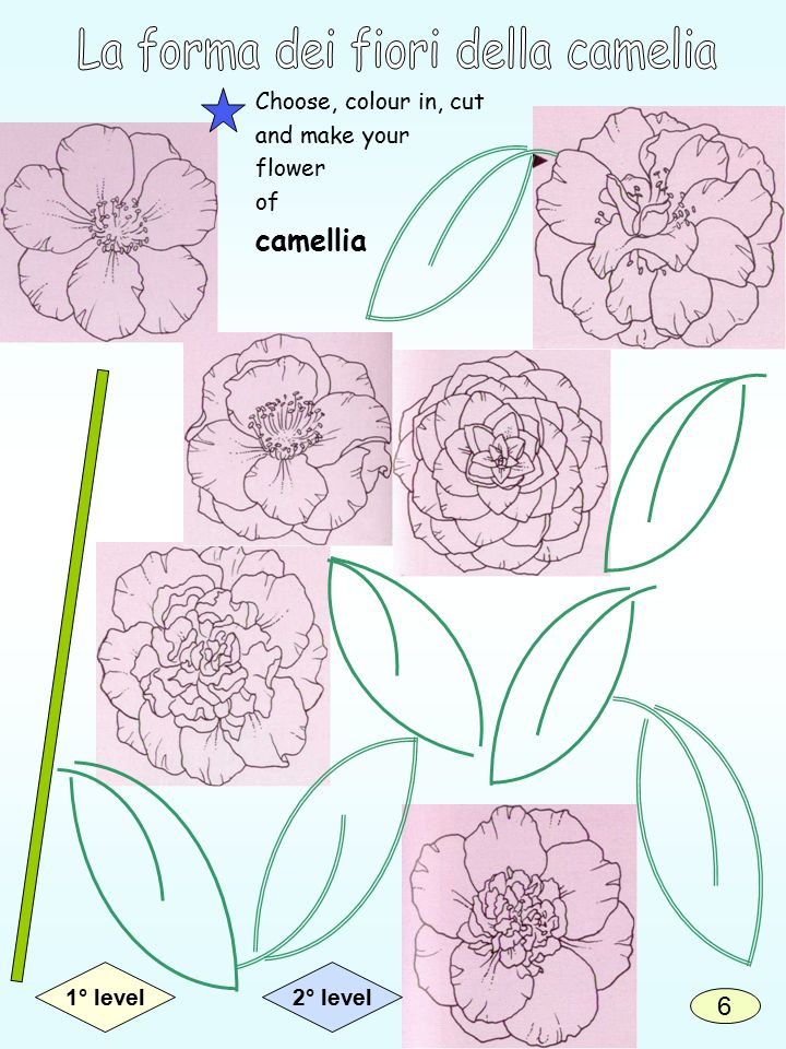 Choose, colour in, cut and make your flower of camellia 2° level1° level 6