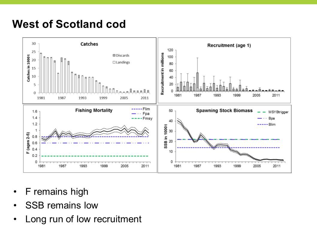 West of Scotland cod F remains high SSB remains low Long run of low recruitment