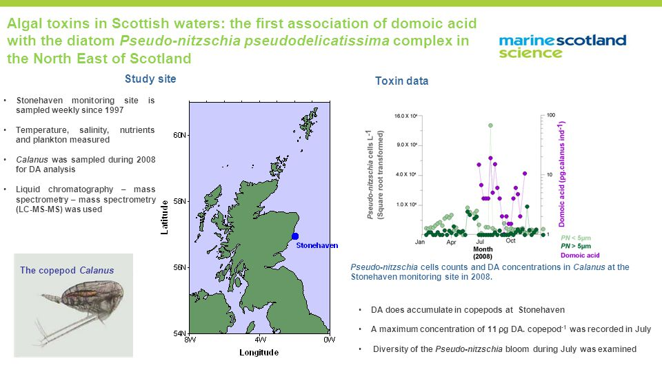 Algal toxins in Scottish waters: the first association of domoic acid with the diatom Pseudo-nitzschia pseudodelicatissima complex in the North East of Scotland Study site Stonehaven monitoring site is sampled weekly since 1997 Temperature, salinity, nutrients and plankton measured Calanus was sampled during 2008 for DA analysis Liquid chromatography – mass spectrometry – mass spectrometry (LC-MS-MS) was used Toxin data DA does accumulate in copepods at Stonehaven A maximum concentration of 11 ρg DA.