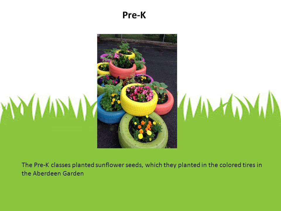 The first goal of the Coles Learning Gardens is to provide every Coles student with the opportunity to grow their own flowers and vegetables in order to foster a greater understanding of the beauty and value of nature in the school's community.