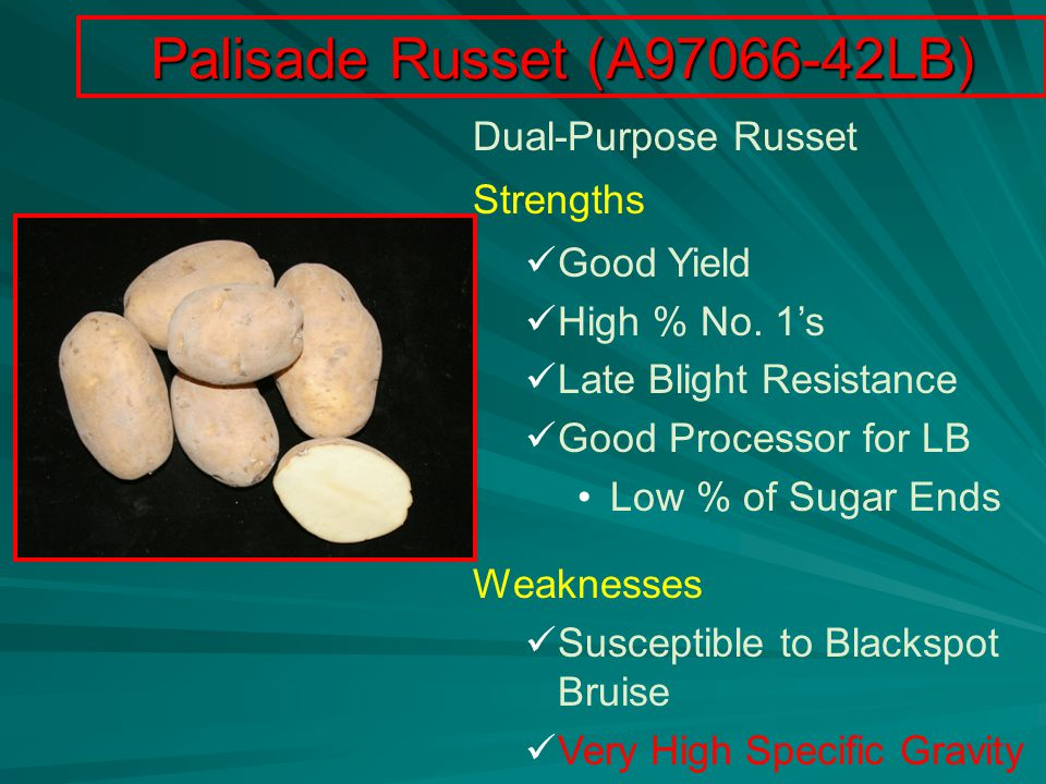 Palisade Russet (A97066-42LB) Dual-Purpose Russet Strengths Good Yield High % No.