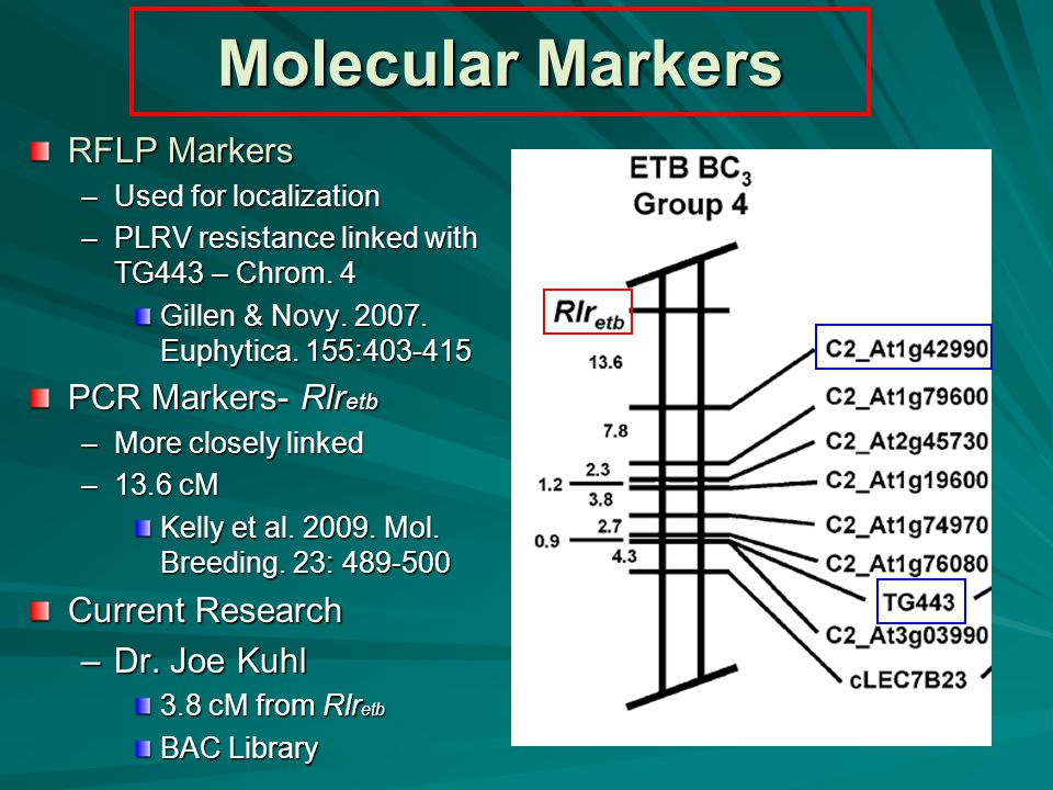 Molecular Markers RFLP Markers –Used for localization –PLRV resistance linked with TG443 – Chrom.