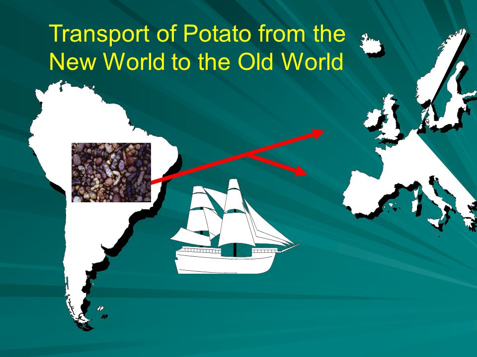 Transport of Potato from the New World to the Old World