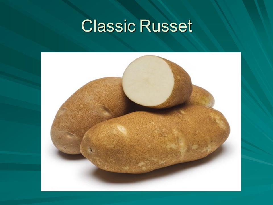 Classic Russet