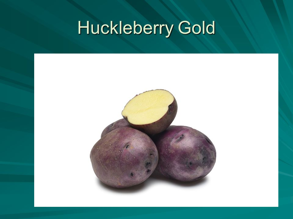 Huckleberry Gold