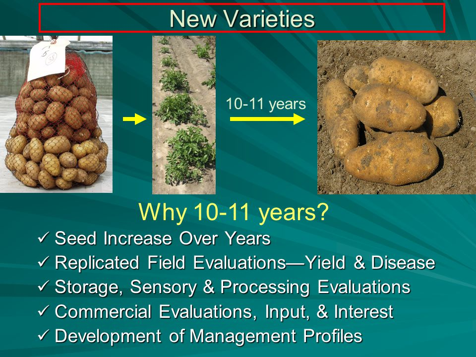Selection Criteria Market acceptance Market acceptance Market delivery (maturity, storability) Market delivery (maturity, storability) Economic benefit (better/different than current varieties) Economic benefit (better/different than current varieties)Productiveness Adaptation to different environments Tuber quality Resistance to physiological problems Resistance to pests Production efficiency