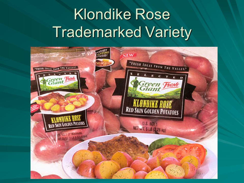 Klondike Rose Trademarked Variety