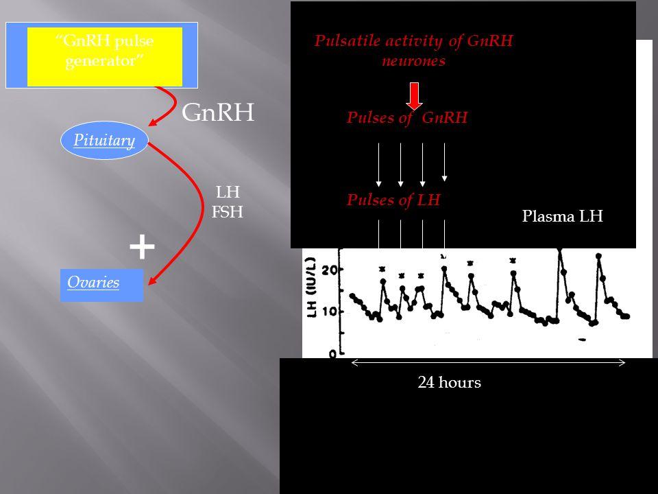 "Ovaries Hypothalamus GnRH Pituitary LH FSH + 24 hours Plasma LH Pulses of LH Pulses of GnRH Pulsatile activity of GnRH neurones ""GnRH pulse generator"""