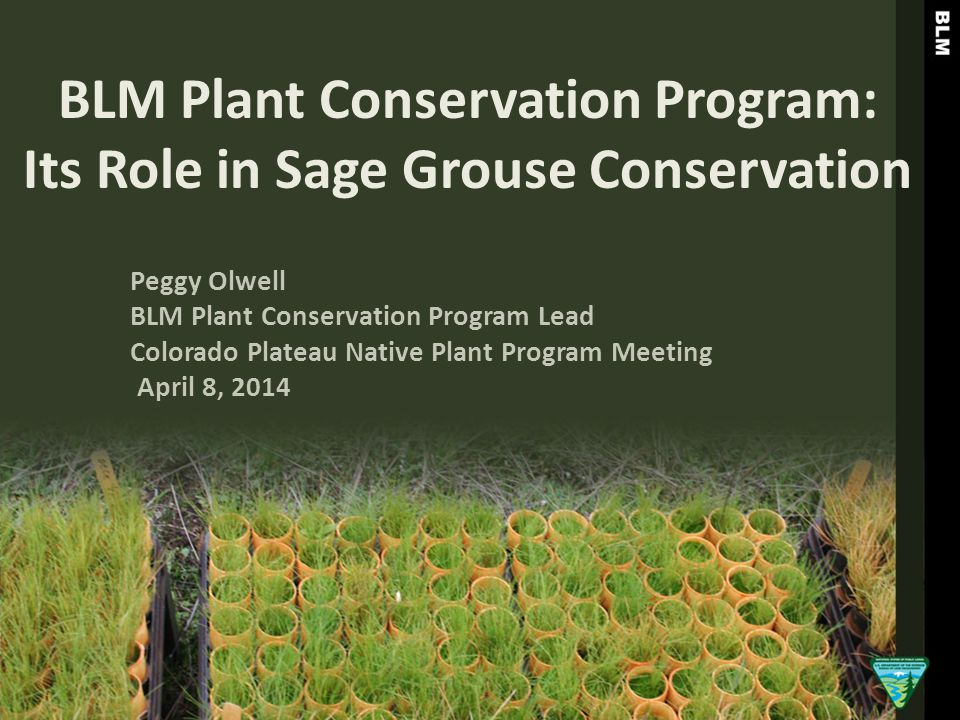 BLM Plant Conservation Program: Its Role in Sage Grouse Conservation Peggy Olwell BLM Plant Conservation Program Lead Colorado Plateau Native Plant Pr