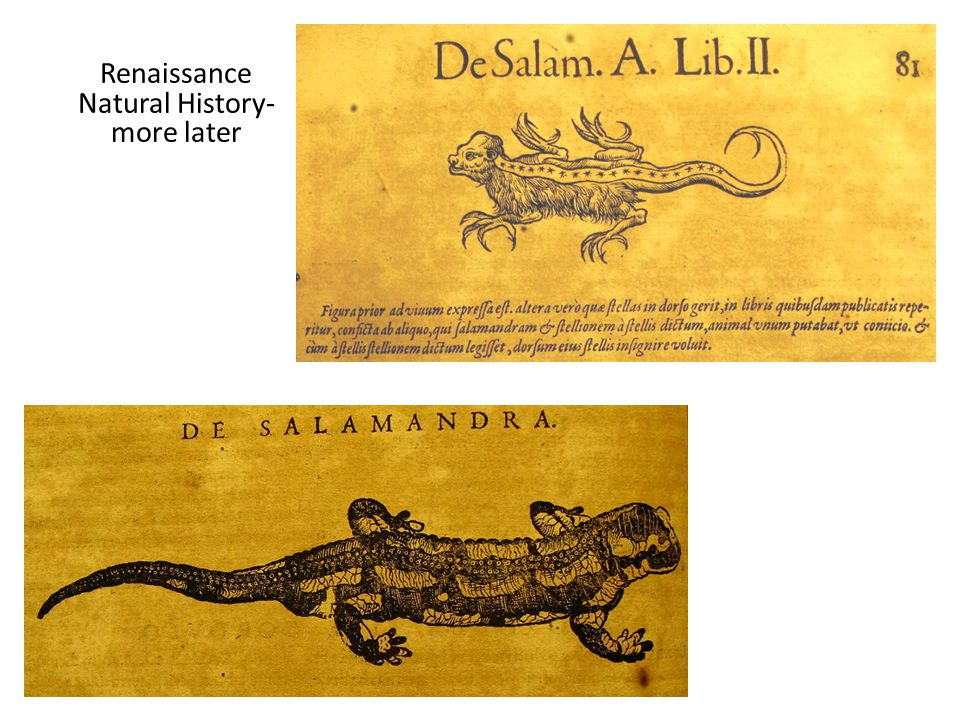 Renaissance Natural History- more later