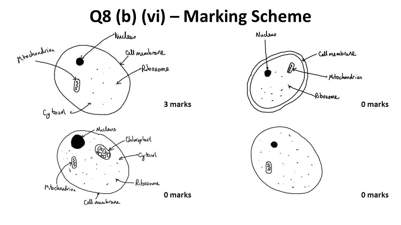 Q8 (b) (vi) – Marking Scheme 3 marks0 marks