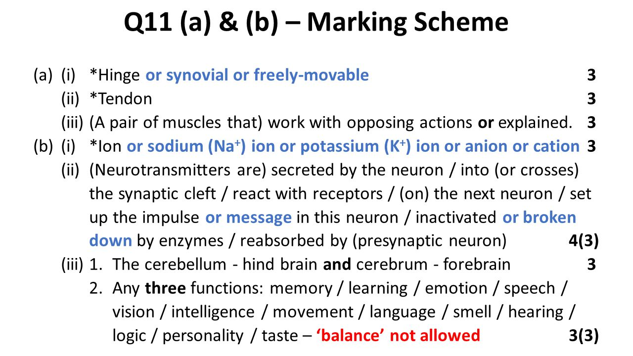 Q11 (a) & (b) – Marking Scheme (a)(i)*Hinge or synovial or freely-movable3 (ii)*Tendon3 (iii)(A pair of muscles that) work with opposing actions or explained.3 (b)(i)*Ion or sodium (Na + ) ion or potassium (K + ) ion or anion or cation3 (ii)(Neurotransmitters are) secreted by the neuron / into (or crosses) the synaptic cleft / react with receptors / (on) the next neuron / set up the impulse or message in this neuron / inactivated or broken down by enzymes / reabsorbed by (presynaptic neuron)4(3) (iii)1.The cerebellum - hind brain and cerebrum - forebrain3 2.Any three functions: memory / learning / emotion / speech / vision / intelligence / movement / language / smell / hearing / logic / personality / taste – 'balance' not allowed3(3)