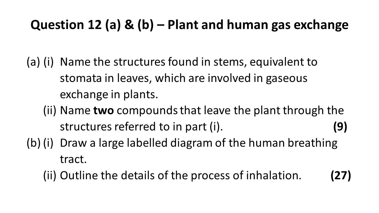 Question 12 (a) & (b) – Plant and human gas exchange (a)(i)Name the structures found in stems, equivalent to stomata in leaves, which are involved in