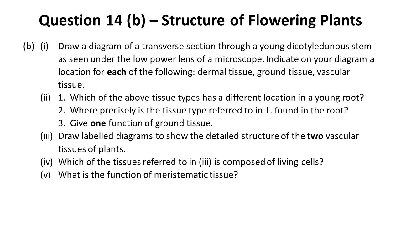 Question 14 (b) – Structure of Flowering Plants (b)(i)Draw a diagram of a transverse section through a young dicotyledonous stem as seen under the low power lens of a microscope.