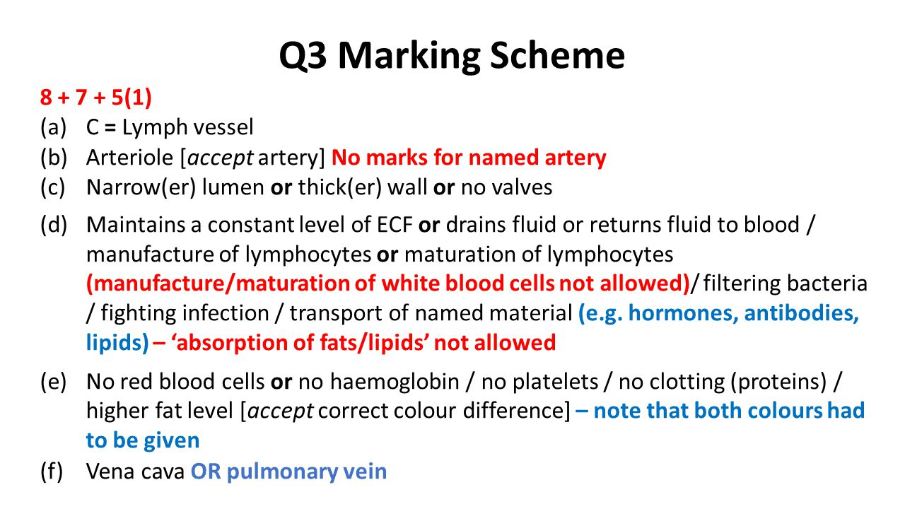 Q3 Marking Scheme 8 + 7 + 5(1) (a)C = Lymph vessel (b)Arteriole [accept artery] No marks for named artery (c)Narrow(er) lumen or thick(er) wall or no valves (d)Maintains a constant level of ECF or drains fluid or returns fluid to blood / manufacture of lymphocytes or maturation of lymphocytes (manufacture/maturation of white blood cells not allowed)/ filtering bacteria / fighting infection / transport of named material (e.g.