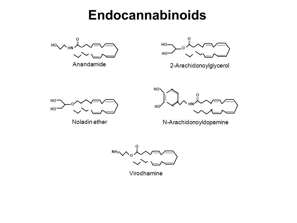 Anandamide 2-Arachidonoylglycerol O HO O O HN HO Noladin ether N-Arachidonoyldopamine O HO O HN HO O NH 2 O Virodhamine Endocannabinoids