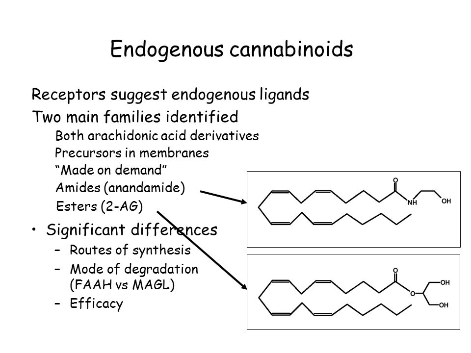 Endogenous cannabinoids Receptors suggest endogenous ligands Two main families identified Both arachidonic acid derivatives Precursors in membranes Made on demand Amides (anandamide) Esters (2-AG) Significant differences –Routes of synthesis –Mode of degradation (FAAH vs MAGL) –Efficacy