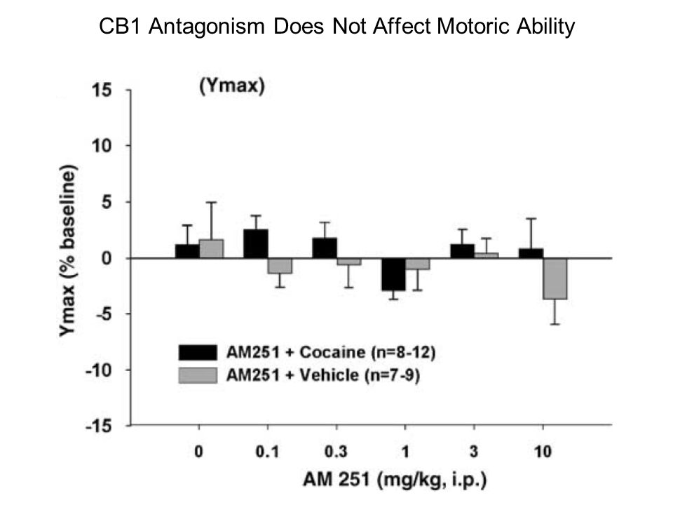 CB1 Antagonism Does Not Affect Motoric Ability