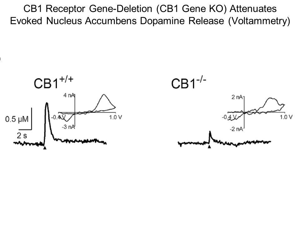 CB1 Receptor Gene-Deletion (CB1 Gene KO) Attenuates Evoked Nucleus Accumbens Dopamine Release (Voltammetry)