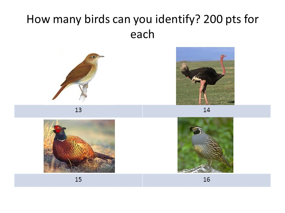 How many birds can you identify? 200 pts for each 1314 1516