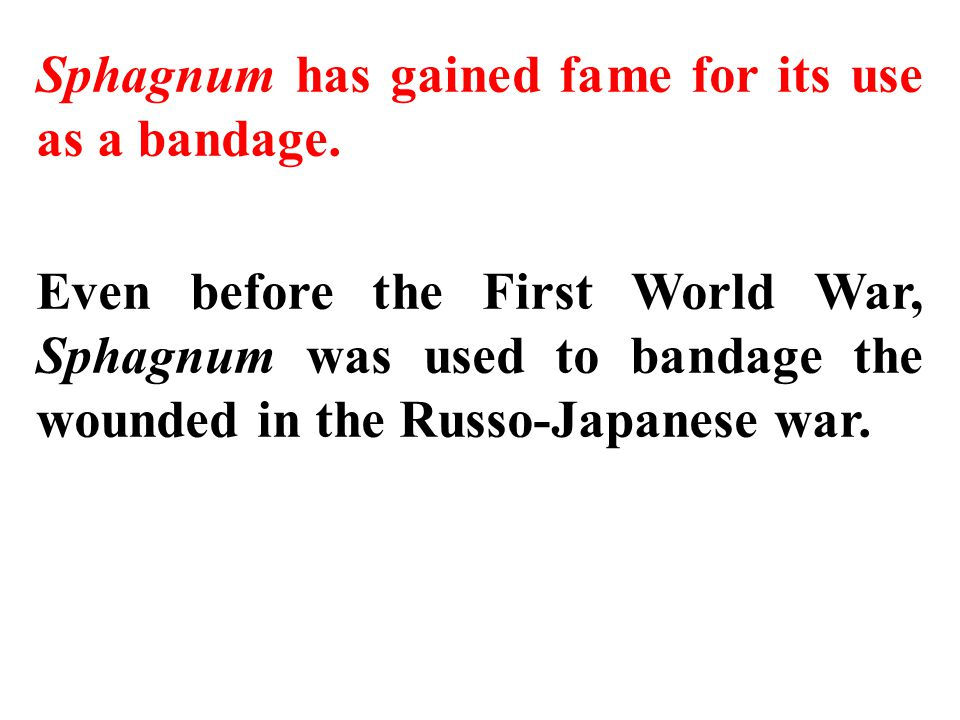Sphagnum has gained fame for its use as a bandage. Even before the First World War, Sphagnum was used to bandage the wounded in the Russo-Japanese war
