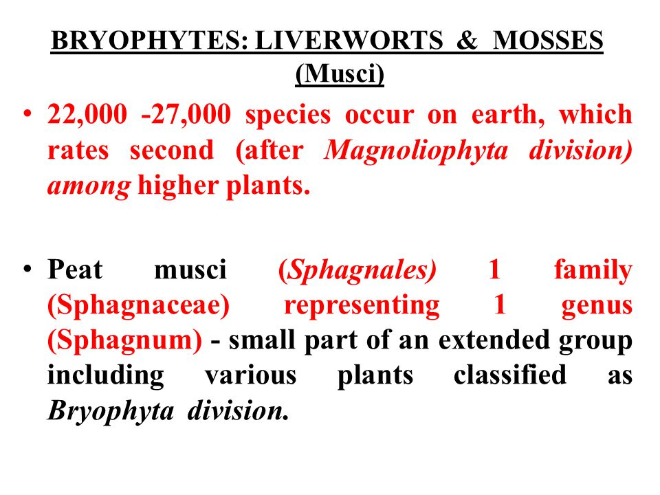 BRYOPHYTES: LIVERWORTS & MOSSES (Musci) 22,000 -27,000 species occur on earth, which rates second (after Magnoliophyta division) among higher plants.