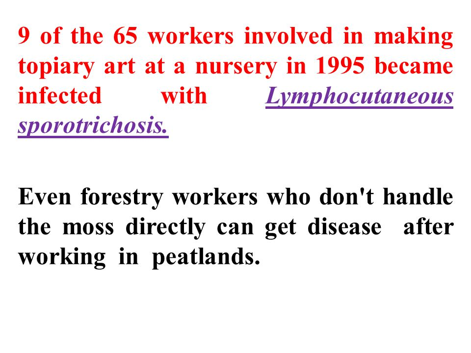 9 of the 65 workers involved in making topiary art at a nursery in 1995 became infected with Lymphocutaneous sporotrichosis. Even forestry workers who