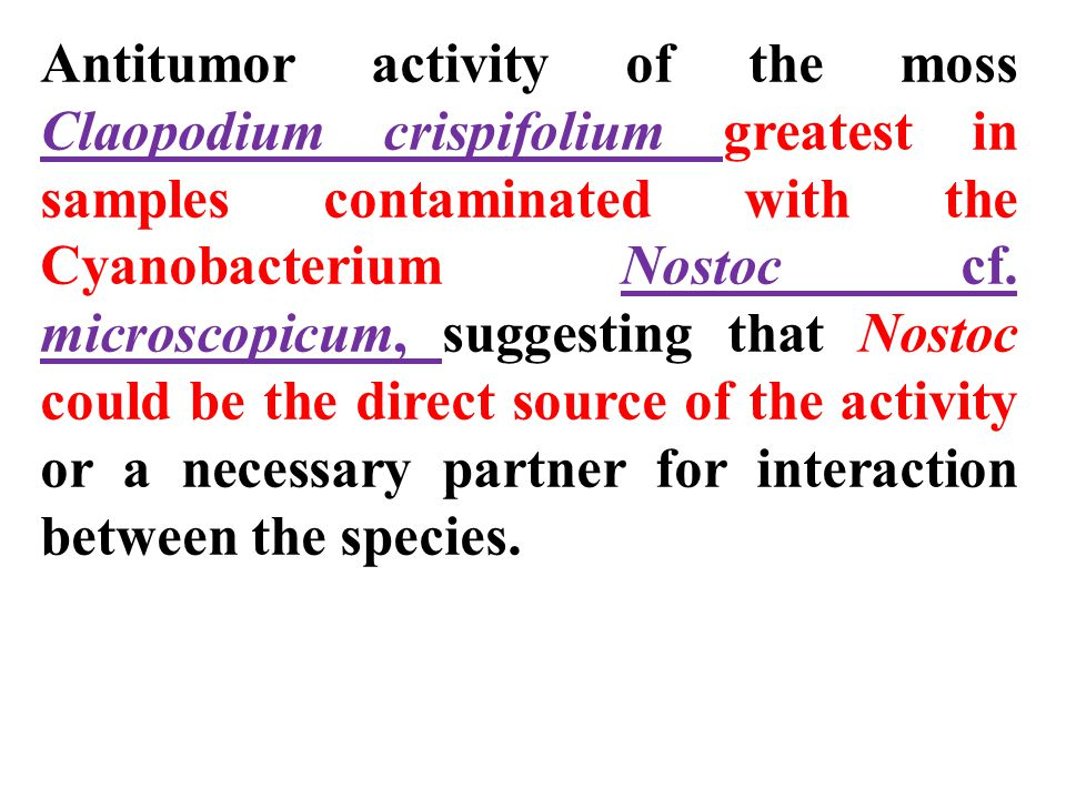 Antitumor activity of the moss Claopodium crispifolium greatest in samples contaminated with the Cyanobacterium Nostoc cf. microscopicum, suggesting t
