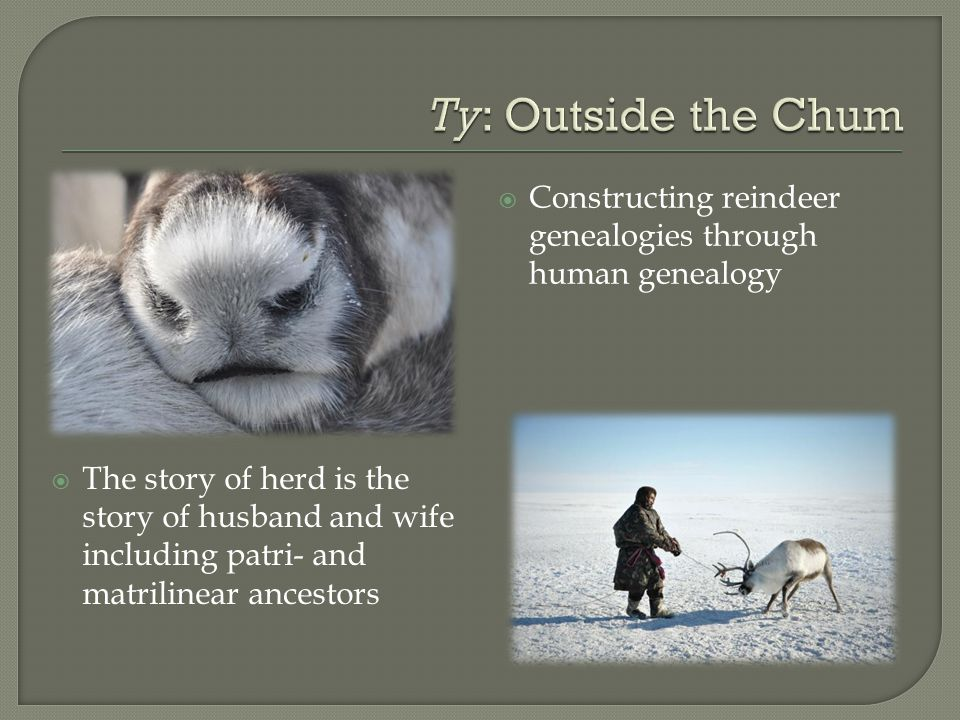  Constructing reindeer genealogies through human genealogy  The story of herd is the story of husband and wife including patri- and matrilinear ancestors