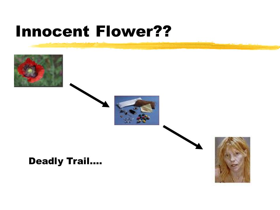 Innocent Flower?? Deadly Trail….