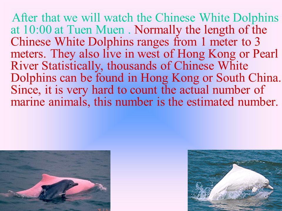 After that we will watch the Chinese White Dolphins at 10:00 at Tuen Muen.