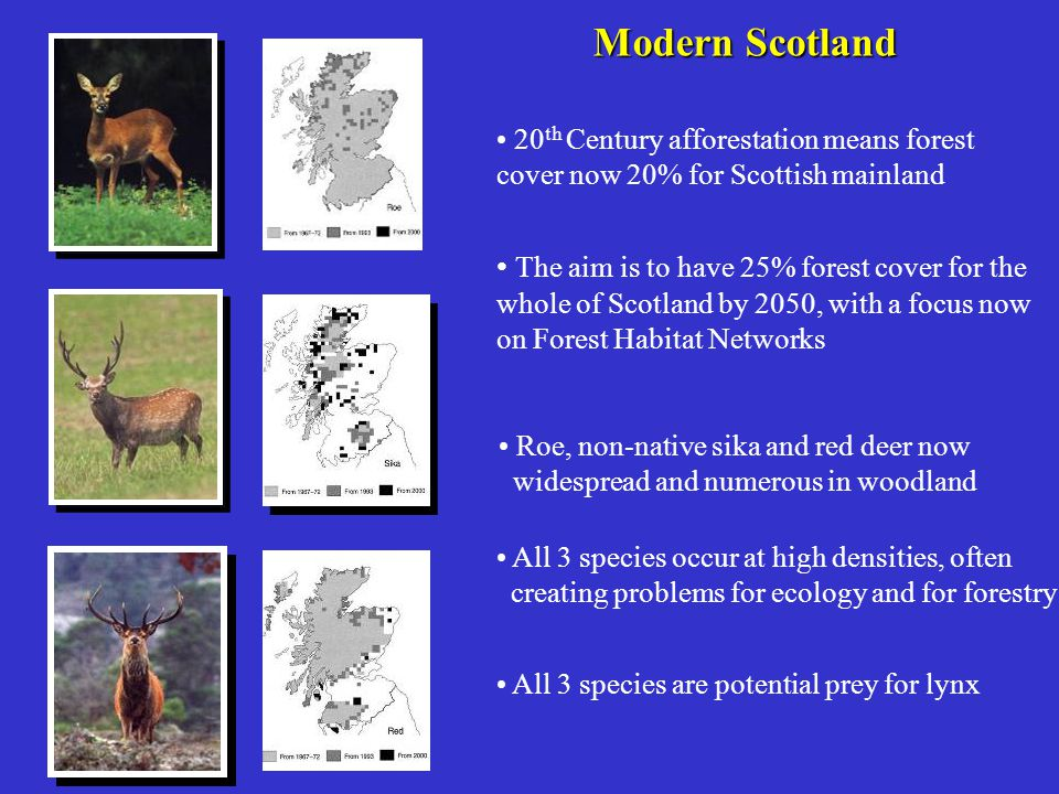 20 th Century afforestation means forest cover now 20% for Scottish mainland The aim is to have 25% forest cover for the whole of Scotland by 2050, wi