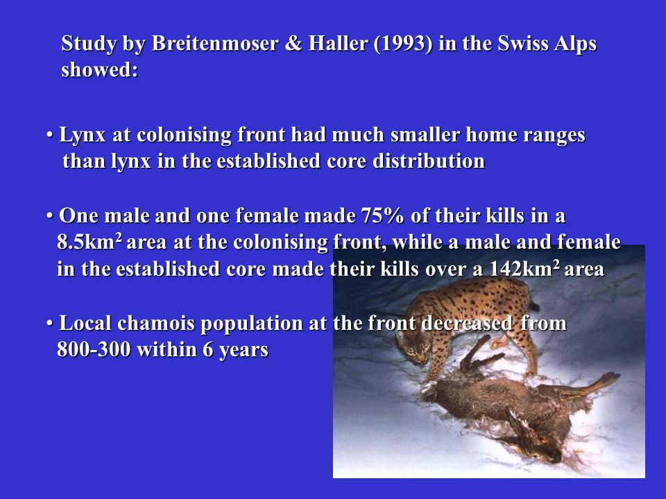 Study by Breitenmoser & Haller (1993) in the Swiss Alps showed: Lynx at colonising front had much smaller home ranges Lynx at colonising front had muc