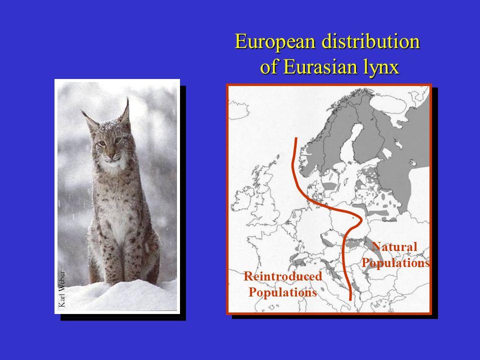 Why consider reintroducing lynx to Scotland.