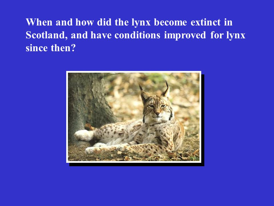 The relationship between lynx density and wild ungulate density for four areas in Europe.