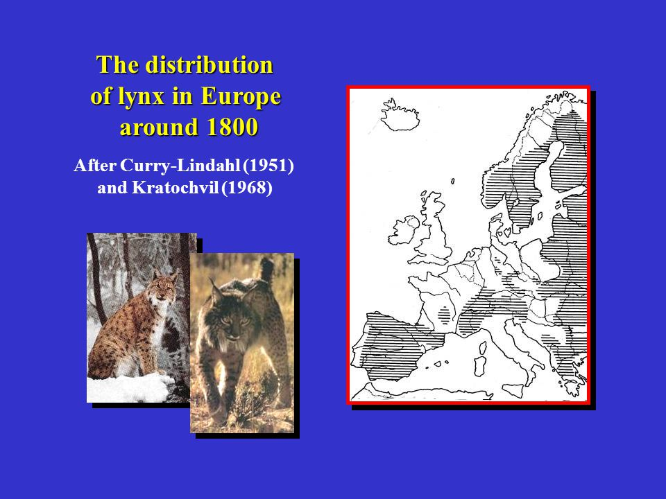 The extinction of lynx in Scotland was not caused by climate change, and probably occurred during the Middle Ages Early and severe deforestation, a decline in deer populations and persecution due to predation on woodland-grazed livestock are likely to have been the most significant factors These factors no longer operate in the modern Scottish landscape