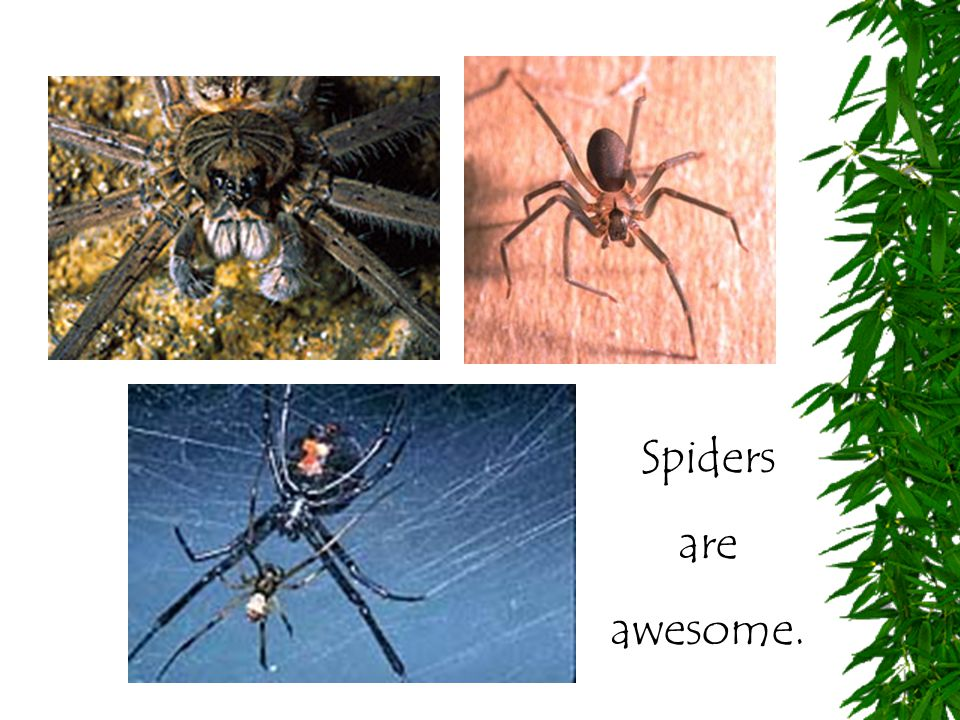 Spiders are awesome.