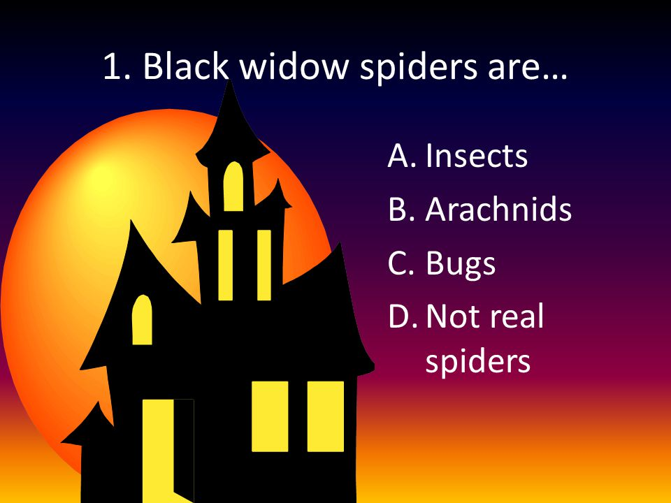 1. Black widow spiders are… A.Insects B.Arachnids C.Bugs D.Not real spiders