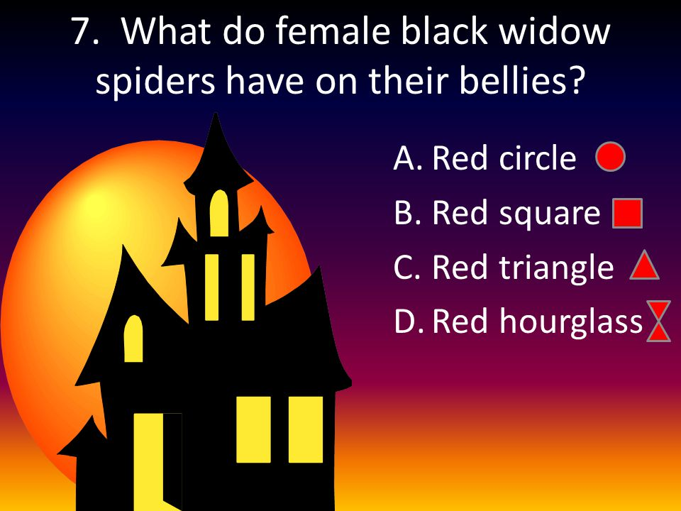 7. What do female black widow spiders have on their bellies.